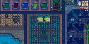 Starfruit-Farm